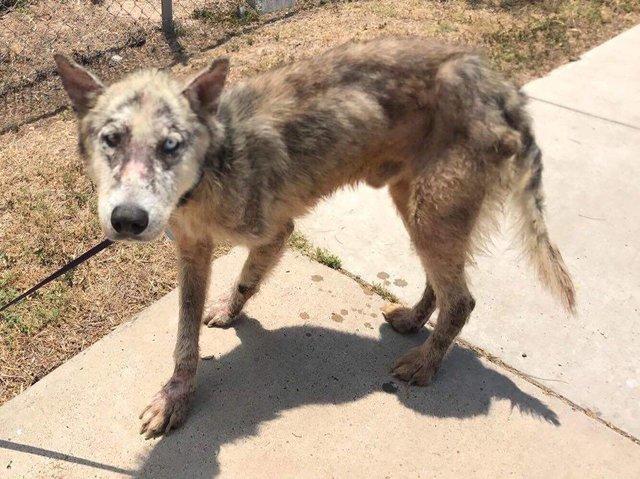 Alors qu'il devait être euthanasié, ce chien a droit à une seconde chance