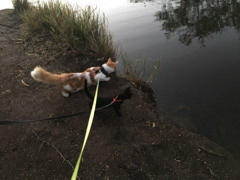 chat en promenade