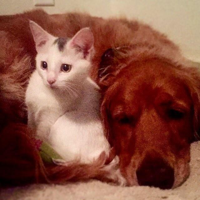 tuukka brady amitié chat chien