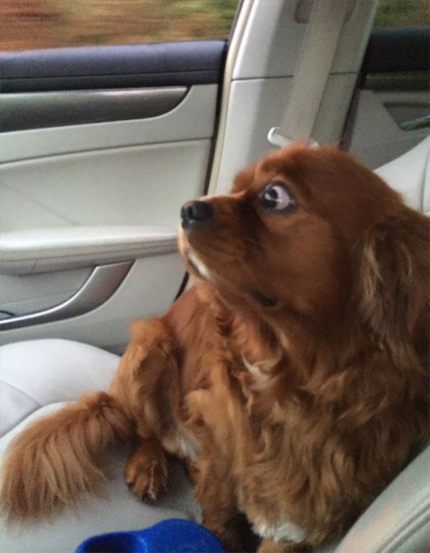 chien roux vétérinaire peur
