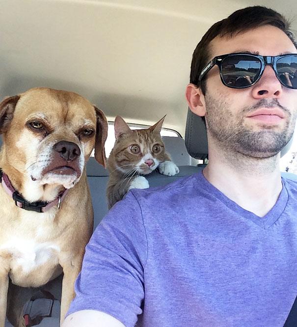 chien chat voiture veto