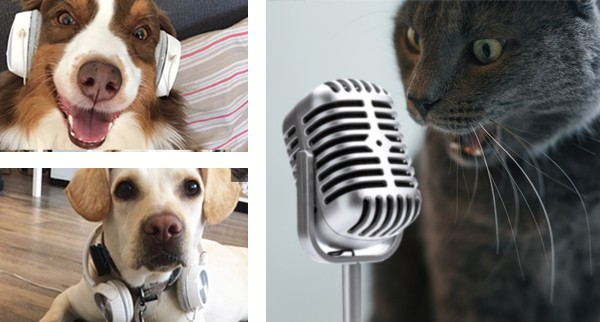 chiens chat podcast micro