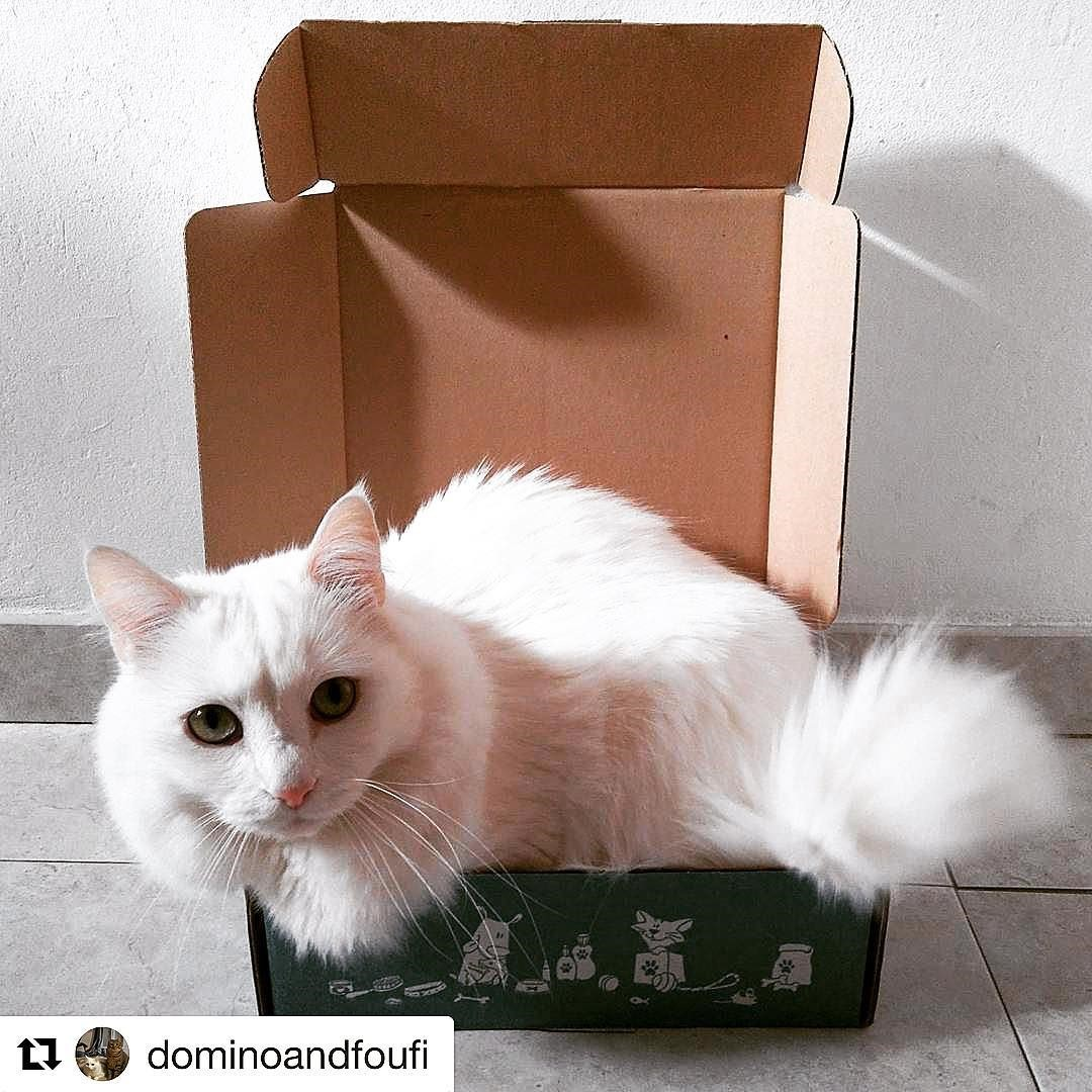 wamiz box chat