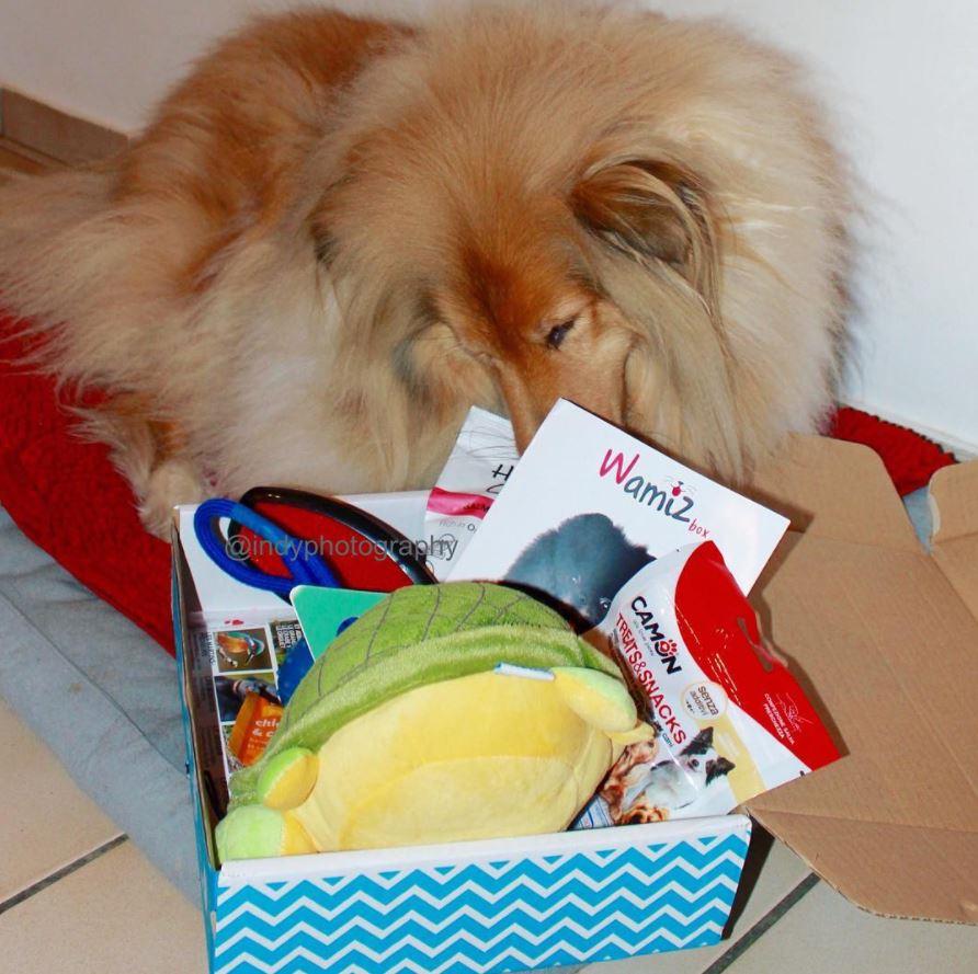 wamiz box instagram chiens