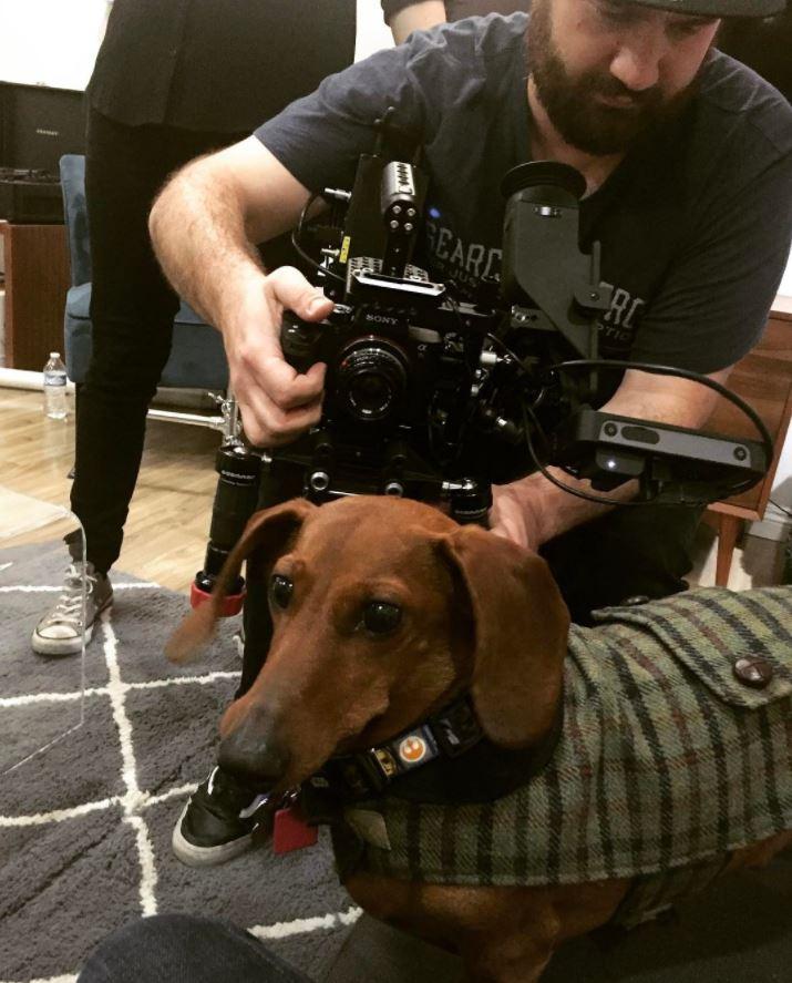captain weenie teckel dachshund