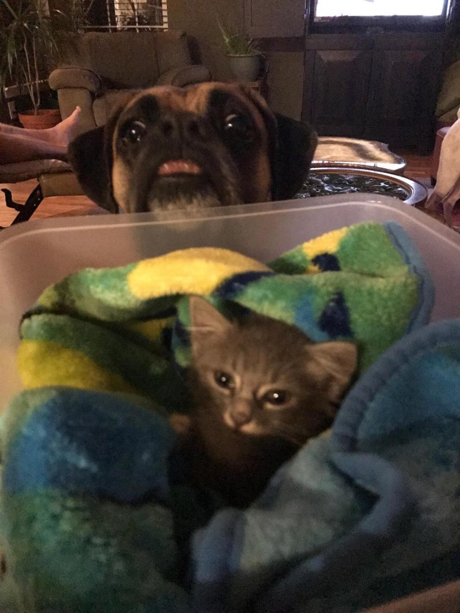 chaton sauvé moteur boxer gardien