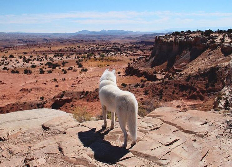 wolf chien voyage